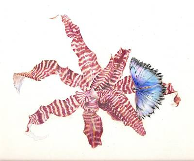 Painting - Cryptanthus With Butterfly by Penrith Goff