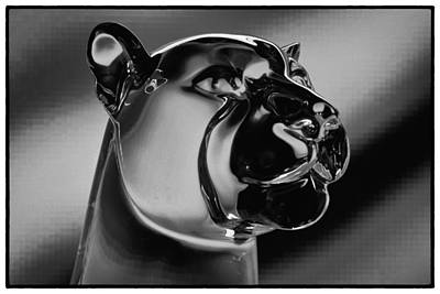 Photograph - Crystal Cougar by David Patterson