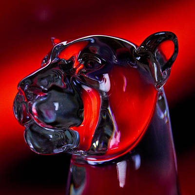 Photograph - Crystal Cougar Head by David Patterson