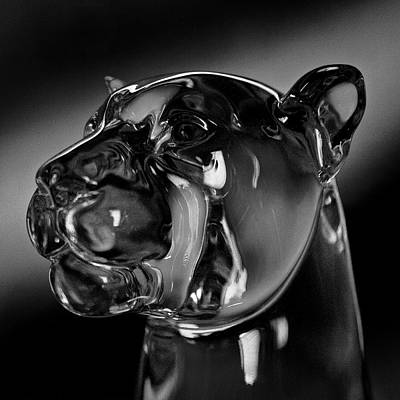 Photograph - Crystal Cougar Head IIi by David Patterson
