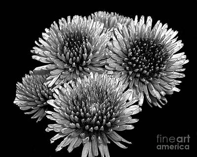Surreal Reality Photograph - Crystal Mums - Surreal Reality by Merton Allen