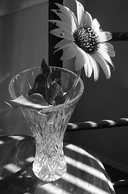 Photograph - Crystal Sunflower by Lynnette Johns