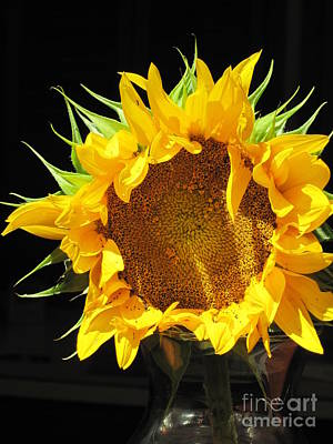Appleton Photograph - Csa Sunflower by Barbara Milhender