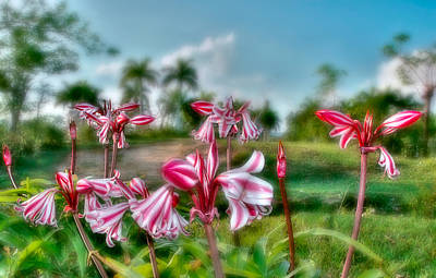 Photograph - Cuba. Tararacos Wildflower In Pinar Del Rio by Juan Carlos Ferro Duque