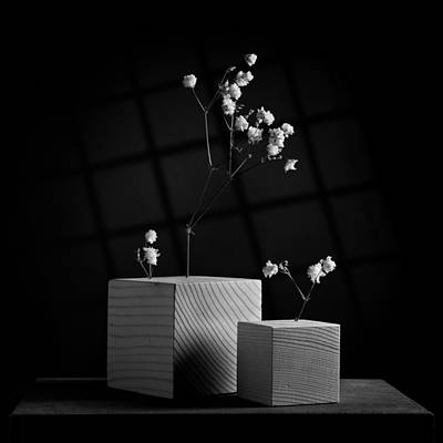 Photograph - Cubicle Flowers - Gray Variations by Ovidiu Bastea