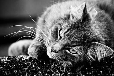 Cat Photograph - Cuddly Cat by Hakon Soreide