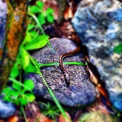 Reptiles Wall Art - Photograph - #culebra #snake #corredora #serpiente by Havito Nopal