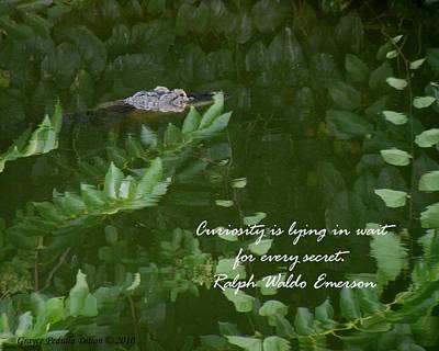 Photograph - Curiosity by Grace Dillon