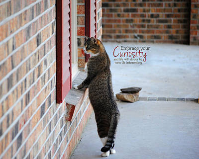 Photograph - Curiosity Inspirational Cat Photograph by Jai Johnson