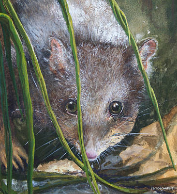 Occur Painting - Curious - Northern Quoll by Jan Lowe