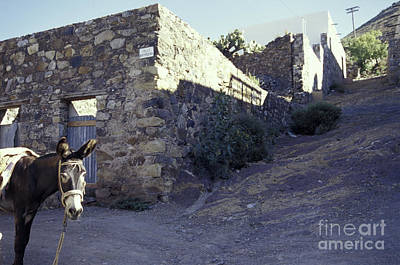 Photograph - Curious Burro Real De Catorce Mexico by John  Mitchell