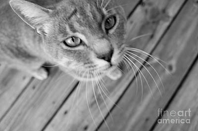 Photograph - Curious Cat by J Kinion
