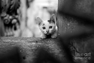 Photograph - Curious by Dean Harte