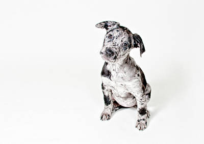One Dog Photograph - Curious Puppy by Chad Latta