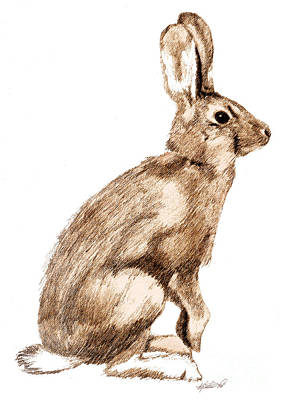 Brown Toned Art Drawing - Curious Rabbit by Kristen Fox