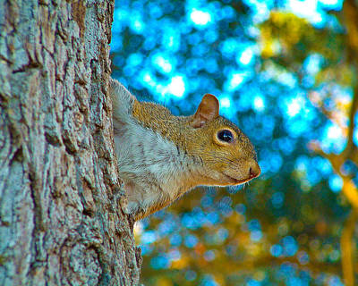 Photograph - Curious Squirrel by Bill Barber