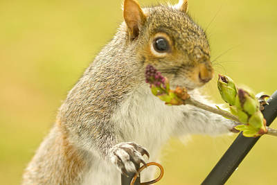 Photograph - Curious Squirrel by Trudy Wilkerson