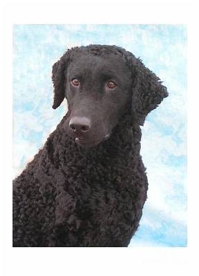 Retriever Digital Art - Curly Coated Retriever 189 by Larry Matthews