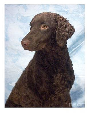 Retriever Digital Art - Curly Coated Retriever 377 by Larry Matthews