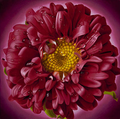Super Realism Painting - Curly Pink Mum With Yellow Center by Tony Chimento