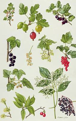 Kitchen Decor Photograph - Currants And Berries by Elizabeth Rice
