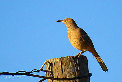 Photograph - Curved Billed Thrasher Sitting On A Post by Roena King