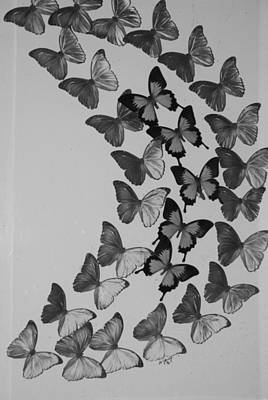 Photograph - Curved Butterflies In Black And White by Rob Hans