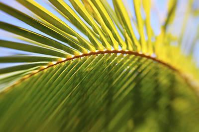 Curved Palm Leaf Art Print by Vince Cavataio - Printscapes