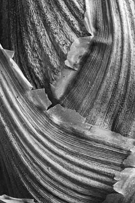 Photograph - Curves by Shirley Mitchell