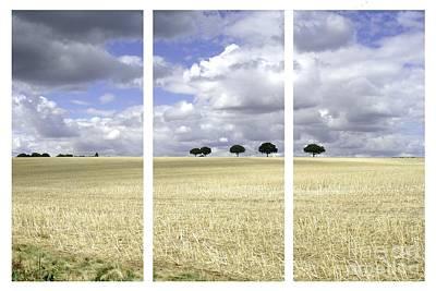 Cut Corn Triptych Original