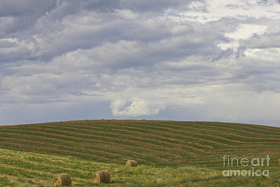 Photograph - Cut Hay And Clouds by Donna Munro