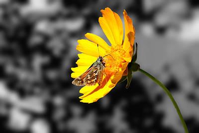 Cute Butterfly On Yellow Gerbera Daisy Art Print