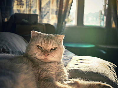Hong Kong Photograph - Cute Cat by Jimmy LL Tsang