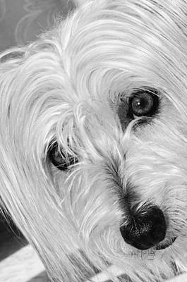 Cute Dog Art Print by Imagevixen Photography
