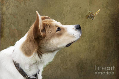 Photograph - Cute Dog With Butterfly by Ethiriel  Photography