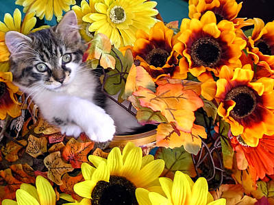 Cats Photograph - Cute Kitty Cat Kitten Lounging In A Flower Basket With Paw Outstretched - Fall Season by Chantal PhotoPix