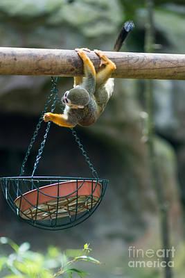 Monkey Photograph - Cute Little Monkey by Andrew  Michael