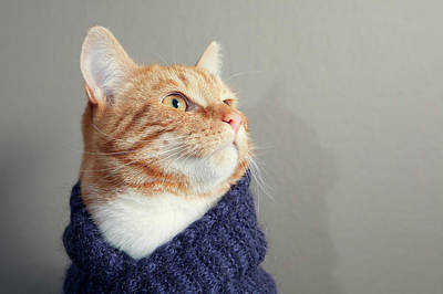 Of Cats Photograph - Cute Red Cat With Purple Scarf by Paula Daniëlse