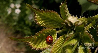 Art Print featuring the photograph Cute Red Ladybug  by Garnett  Jaeger