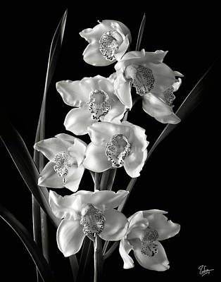 Print featuring the photograph Cymbidium Cluster In Black And White by Endre Balogh