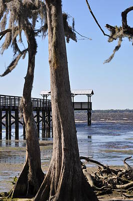 Cypress And Dock At Low Tide Art Print by Tiffney Heaning