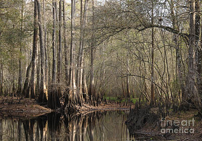 Photograph - Cypress And Water by Nancy Greenland