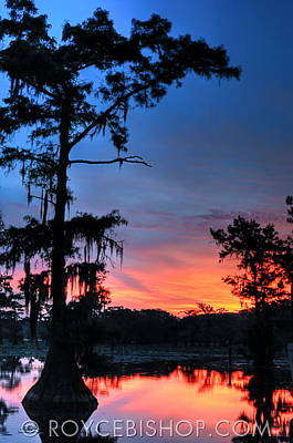 Photograph - Cypress Dawn by Royce Bishop