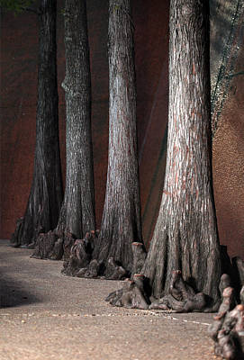 Tyree Photograph - Cypress by Greg Kopriva