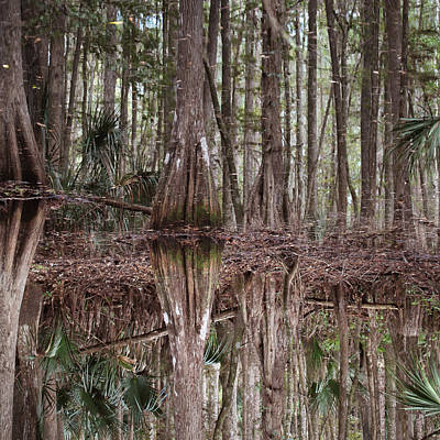 Cypress Swamp Photograph - Cypress Hammock by Joseph G Holland