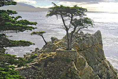Photograph - Cypress Monterey Ca by Marie Morrisroe
