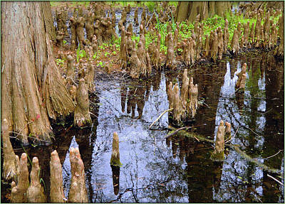 Tree Roots Digital Art - Cypress Roots by Mindy Newman