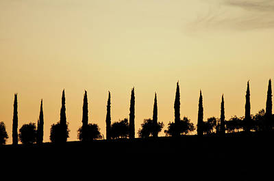 Umbria Photograph - Cypress Silhouette by Peter Millar