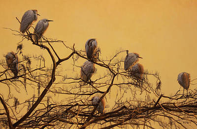 Cattle Egret Painting - Cypress Skies by Billy-jack  Milligan