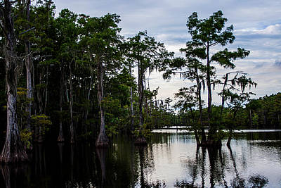 Art Print featuring the photograph Cypress Swamp In Louisiana by Ester  Rogers